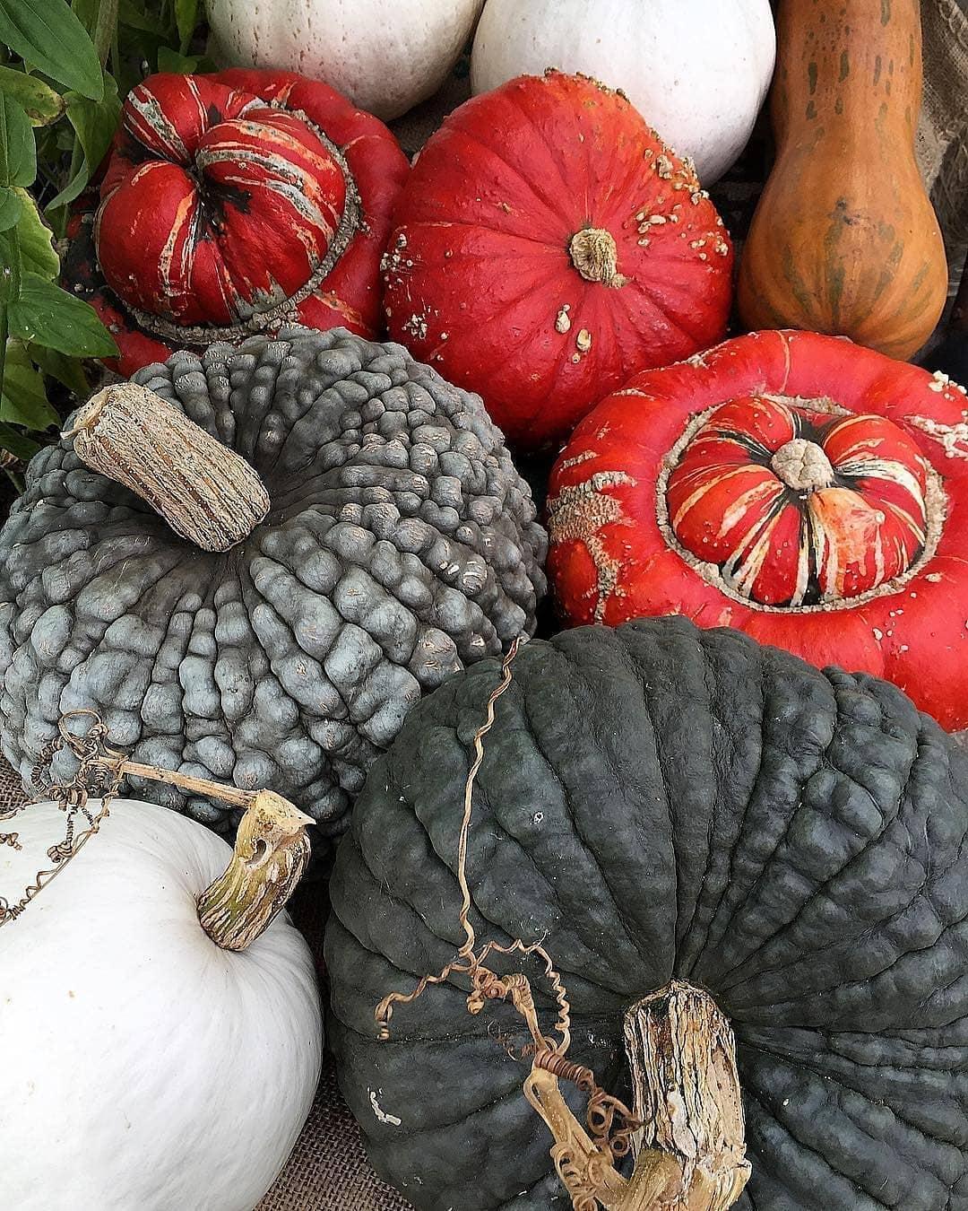 Awesome, Organic Pumpkins From Bettinak Halloweenpumpkin - Gardening