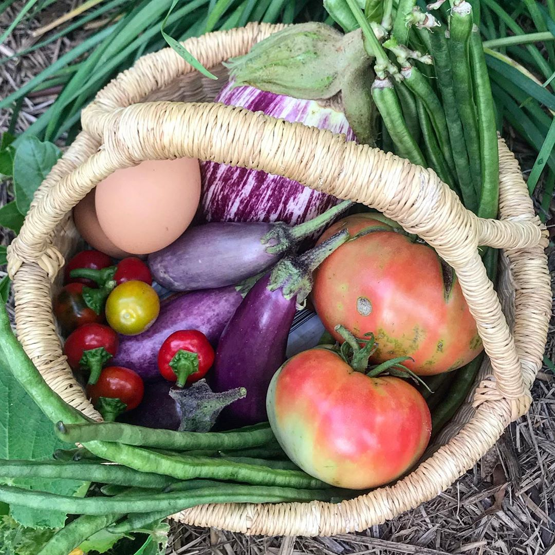 A Mixed Basket Of Foraged Goodies From T Tomato - Gardening
