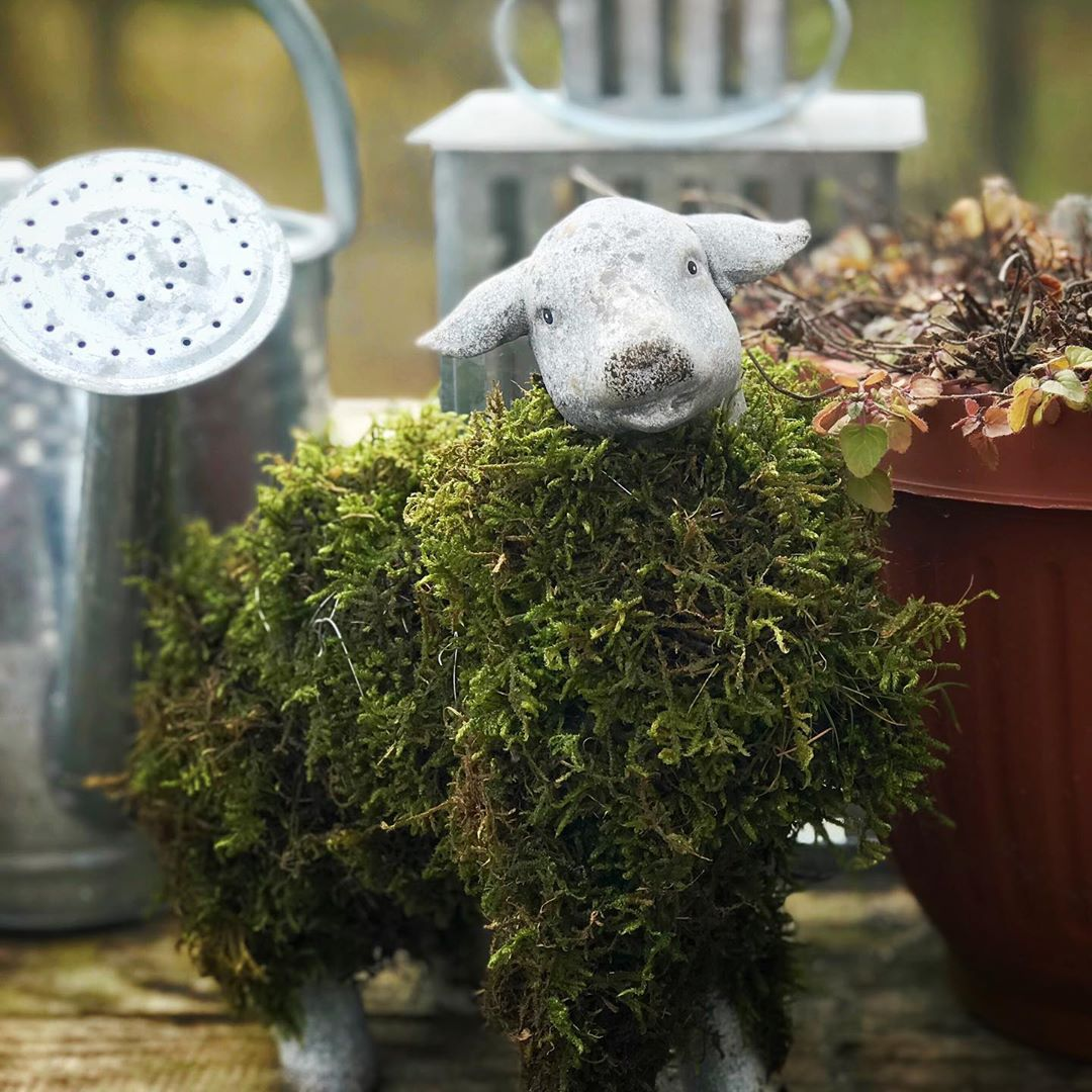 My Little Sheep Got A Mossy Wool Coat💚 Sheep - Home Accents