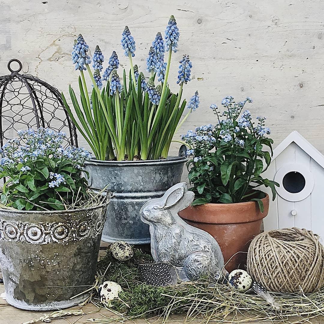 Ich Wünsche Euch Allen Einen Guten Start Flowers - Decoration Ideas