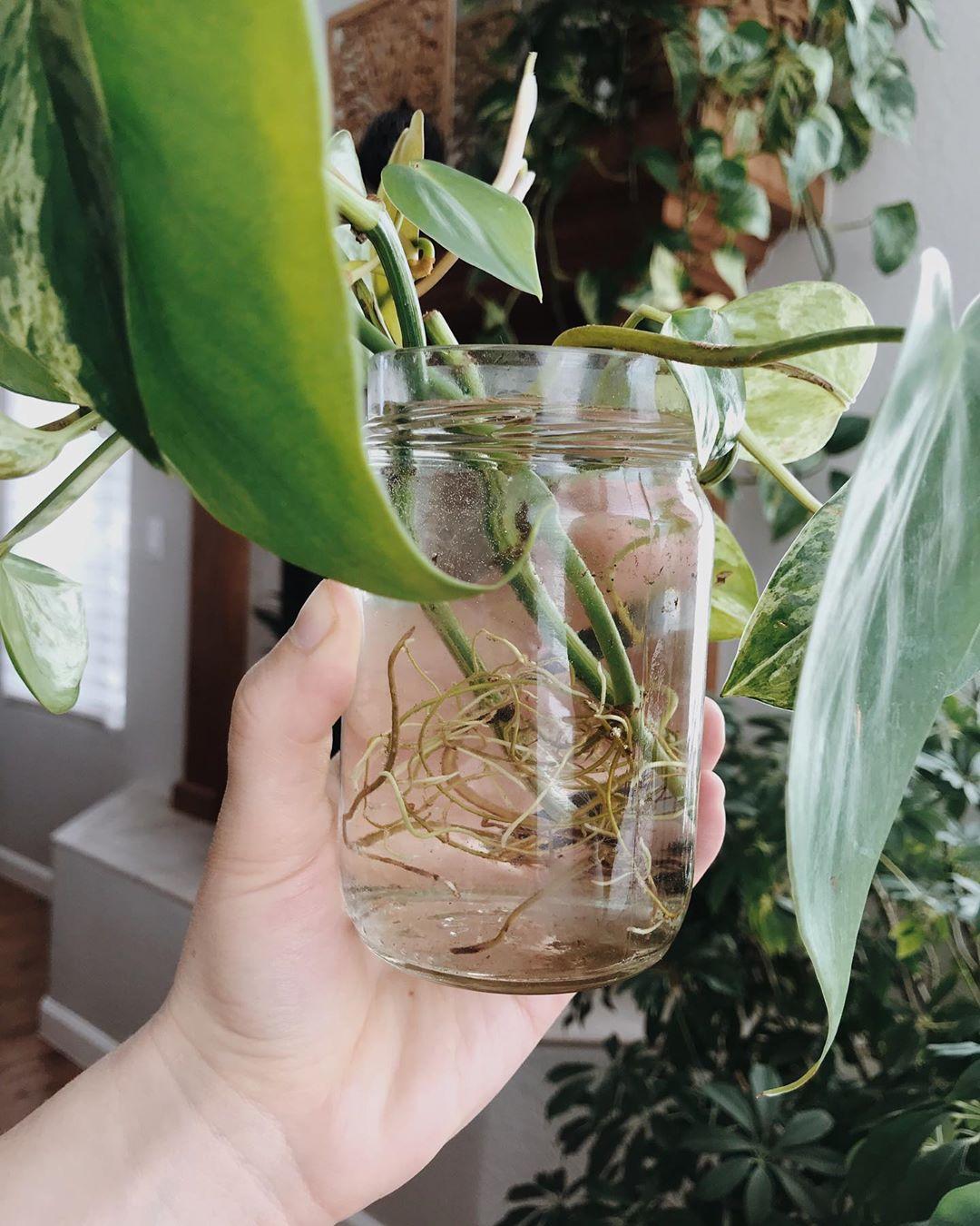 A Little Root Appreciation 🌱 My Pathos - Gardening