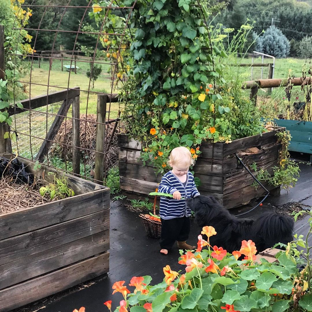Toddler Shares His Beans With Beloved Do - Gardening