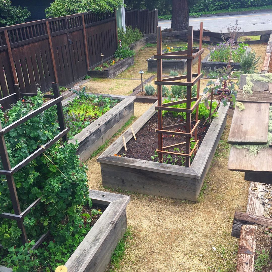 Oh Grow Up! I'M Talking To My Plants Of - Diy Garden