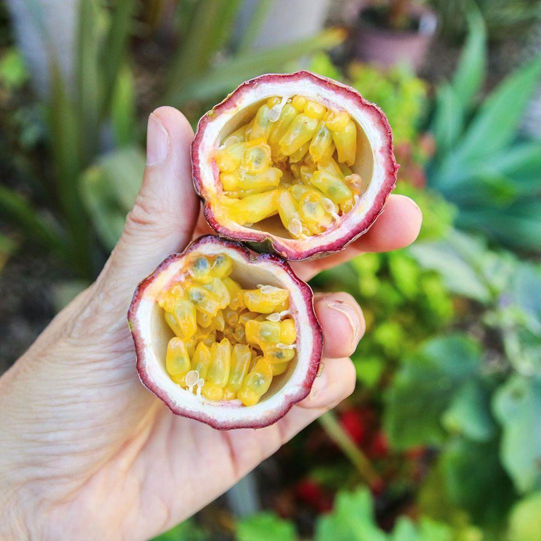 Golden Jewels Of Pulp Sweetness 😍🌟😋.. - Gardening